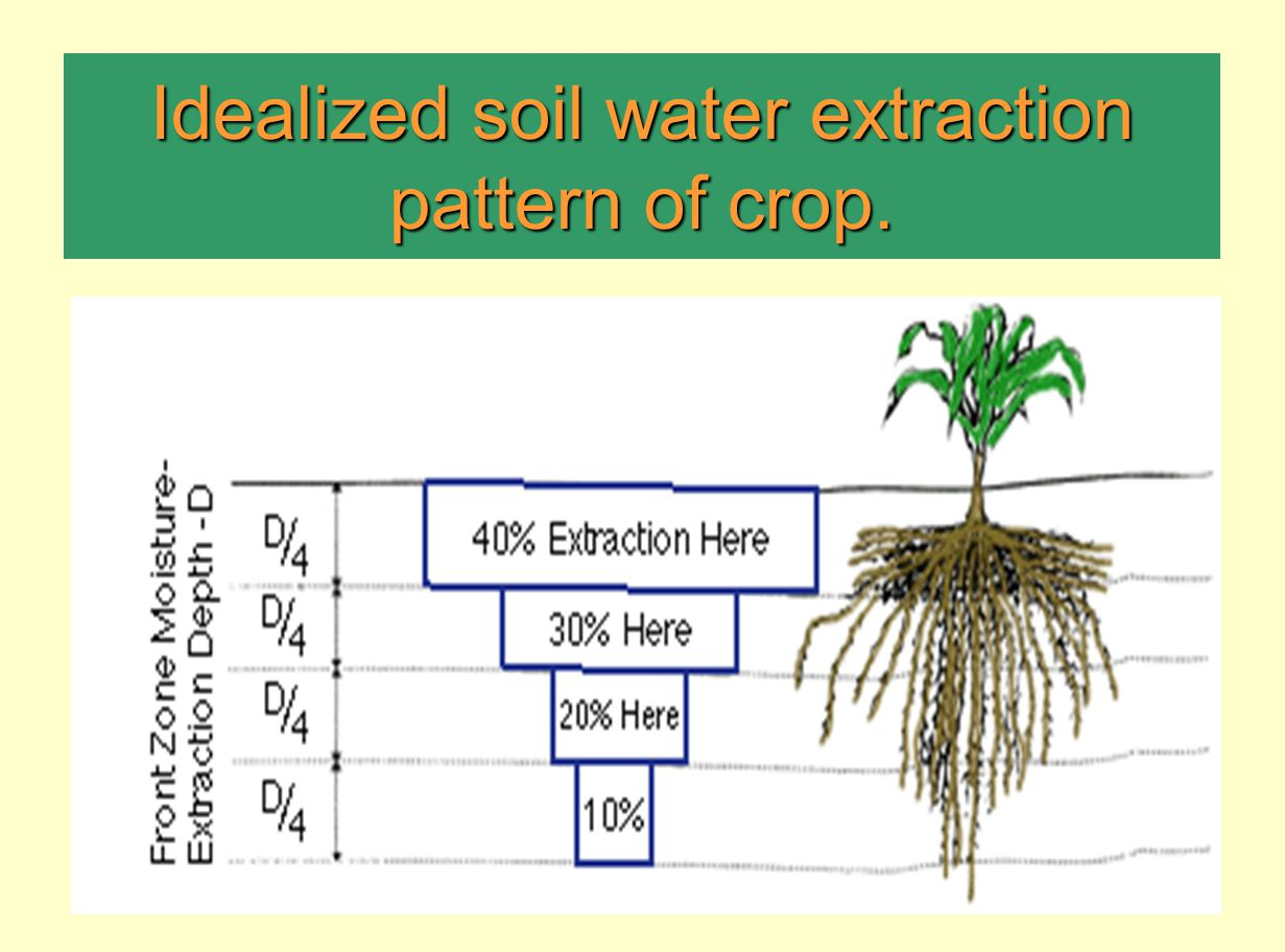 Idealized soil water extraction pattern of crop.