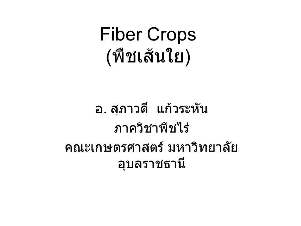 Fiber Crops ( พืชเส้นใย ) อ. สุภาวดี แก้วระหัน ภาควิชาพืชไร่ คณะเกษตรศาสตร์ มหาวิทยาลัย อุบลราชธานี