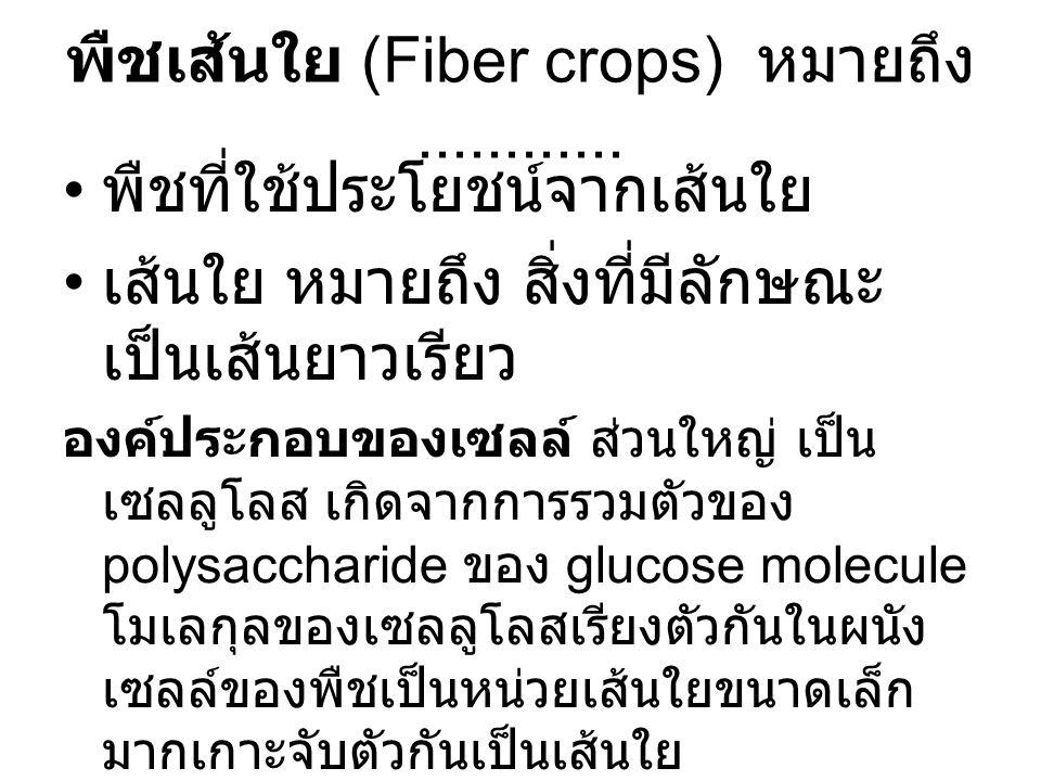 พืชเส้นใย (Fiber crops) หมายถึง............ พืชที่ใช้ประโยชน์จากเส้นใย เส้นใย หมายถึง สิ่งที่มีลักษณะ เป็นเส้นยาวเรียว องค์ประกอบของเซลล์ ส่วนใหญ่ เป็