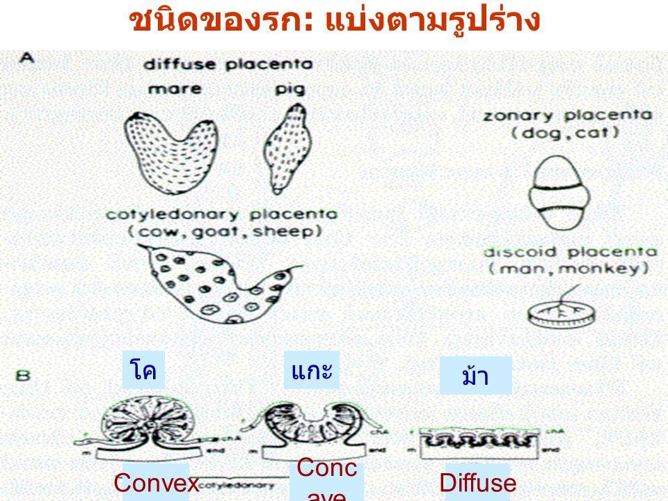 Jump to first page ชนิดของรก: แบ่งตามรูปร่าง โค Convex Conc ave แกะ Diffuse ม้า