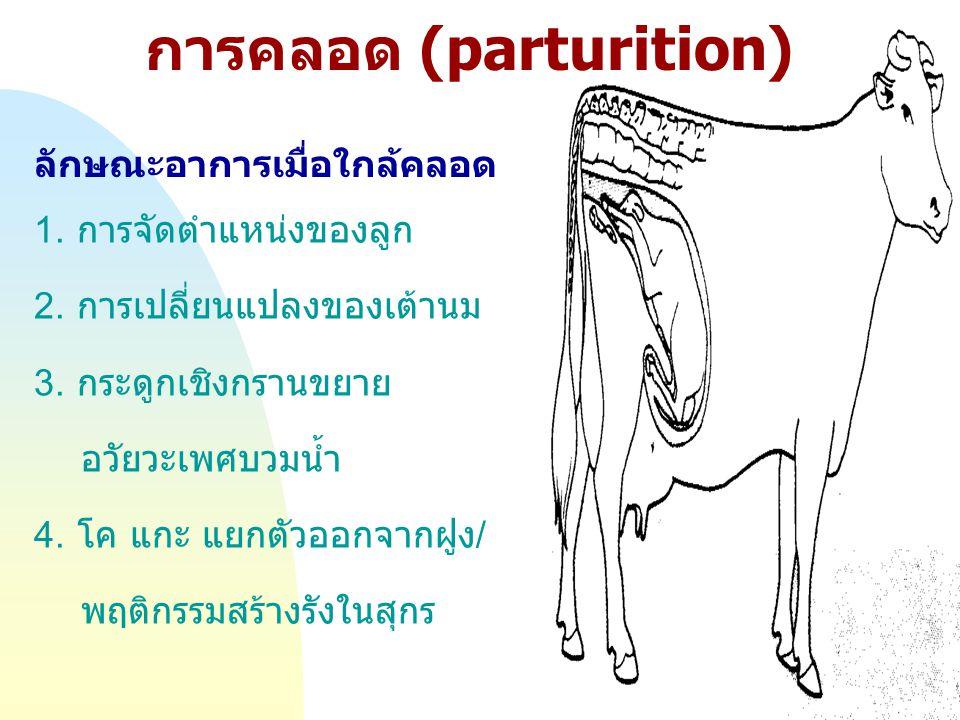 Jump to first page การคลอด (parturition) ลักษณะอาการเมื่อใกล้คลอด 1. การจัดตำแหน่งของลูก 2. การเปลี่ยนแปลงของเต้านม 3. กระดูกเชิงกรานขยาย อวัยวะเพศบวม