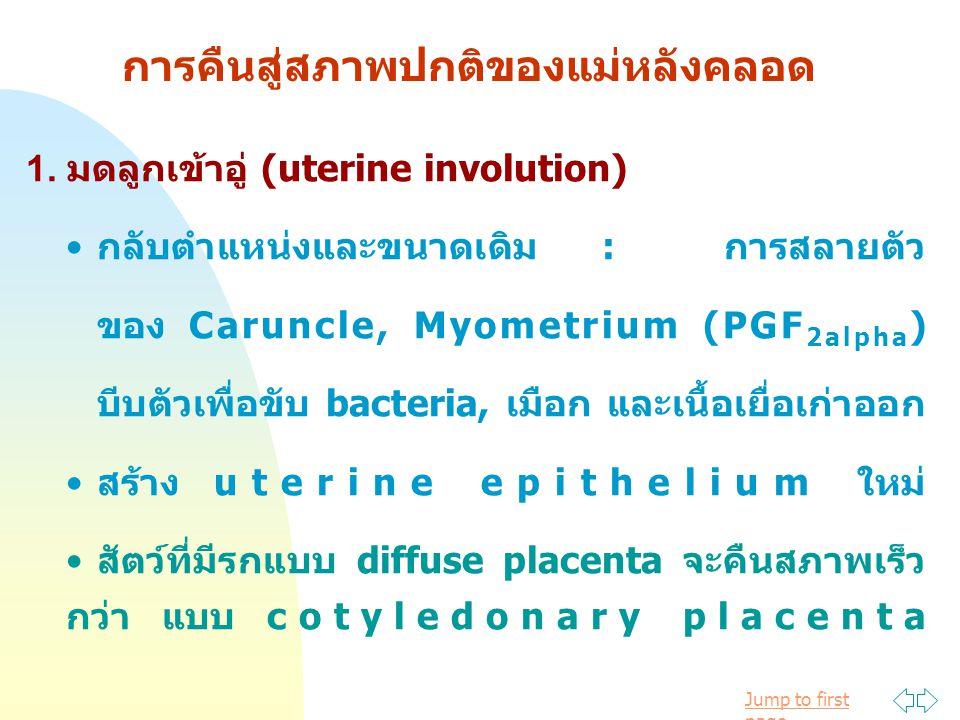 Jump to first page การคืนสู่สภาพปกติของแม่หลังคลอด 1. มดลูกเข้าอู่ (uterine involution) กลับตำแหน่งและขนาดเดิม : การสลายตัว ของ Caruncle, Myometrium (
