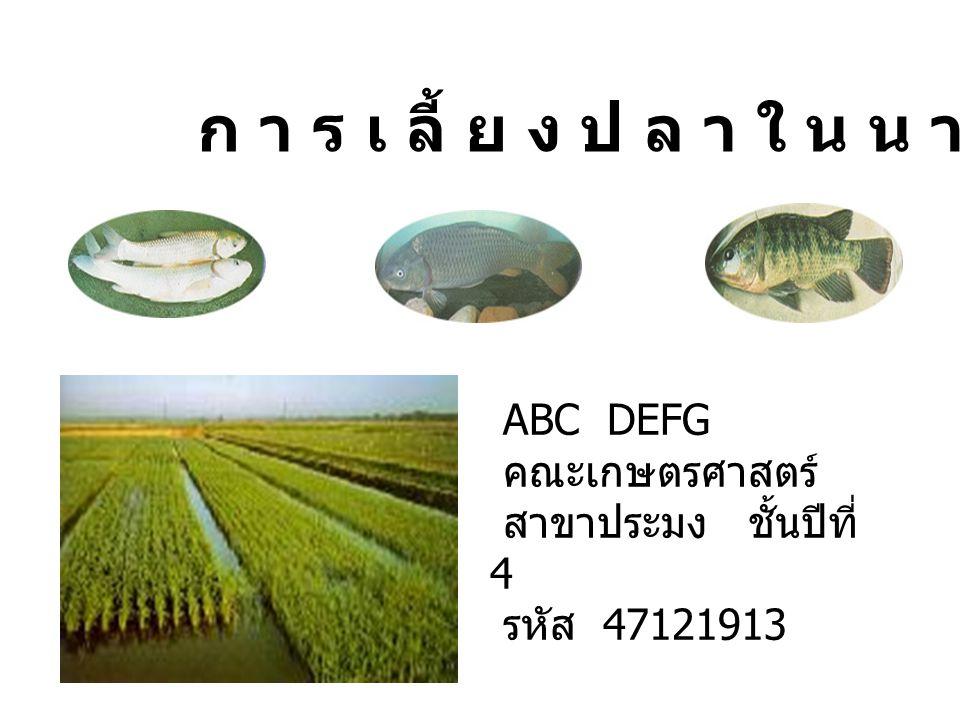 ก า ร เ ลี้ ย ง ป ล า ใ น น า ข้า ว ABC DEFG คณะเกษตรศาสตร์ สาขาประมง ชั้นปีที่ 4 รหัส 47121913