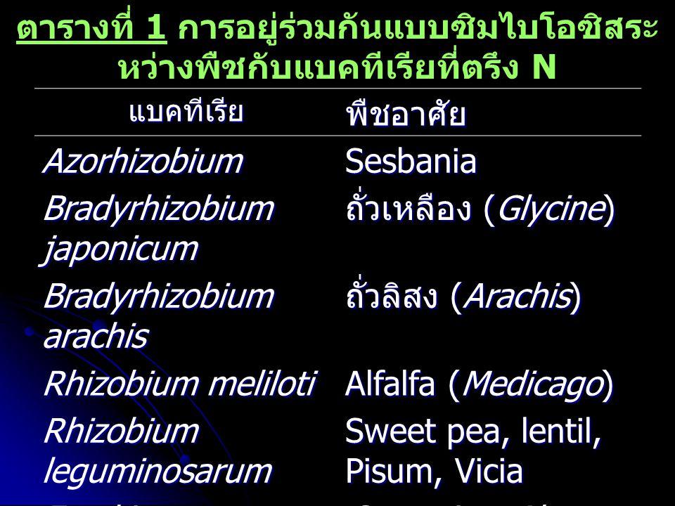 ตารางที่ 1 การอยู่ร่วมกันแบบซิมไบโอซิสระ หว่างพืชกับแบคทีเรียที่ตรึง N แบคทีเรียพืชอาศัย AzorhizobiumSesbania Bradyrhizobium japonicum ถั่วเหลือง (Gly