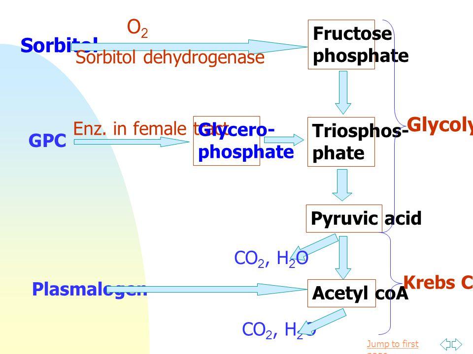 Jump to first page อุณหภูมิ pH : 6.9-7.5 เหมาะกับการทำงาน ของ enzyme ในขบวนการ metabolism ที่บริเวณ Cauda epididymis มี pH 5.8 ตัวอสุจิมีการเคลื่อนที่น้อย Osmotic Gas แสง Peroxidation --> loss of permeable ปัจจัยที่มีผลต่อ metabolism ของ sperm