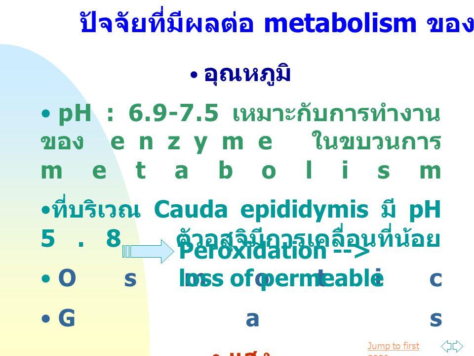 Jump to first page อุณหภูมิ pH : 6.9-7.5 เหมาะกับการทำงาน ของ enzyme ในขบวนการ metabolism ที่บริเวณ Cauda epididymis มี pH 5.8 ตัวอสุจิมีการเคลื่อนที่