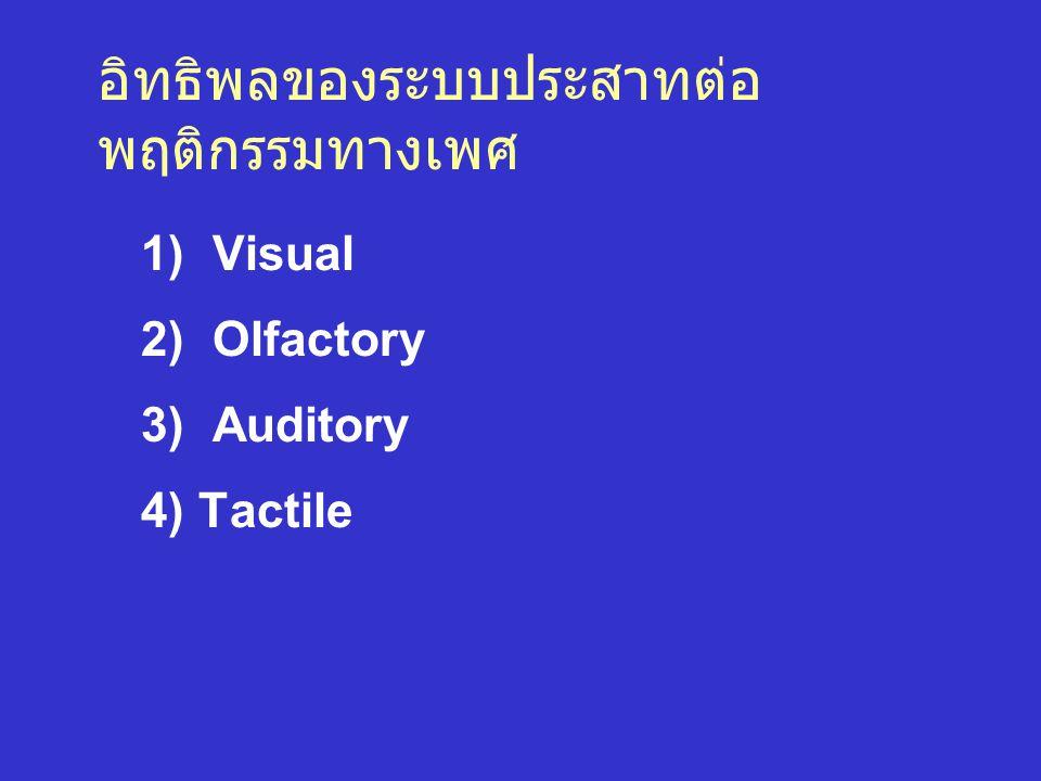 อิทธิพลของระบบประสาทต่อ พฤติกรรมทางเพศ 1) Visual 2) Olfactory 3) Auditory 4) Tactile
