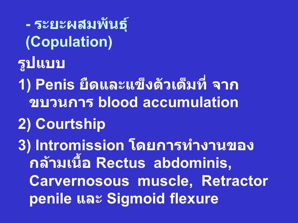 - ระยะผสมพันธุ์ (Copulation) รูปแบบ 1) Penis ยืดและแข็งตัวเต็มที่ จาก ขบวนการ blood accumulation 2) Courtship 3) Intromission โดยการทำงานของ กล้ามเนื้