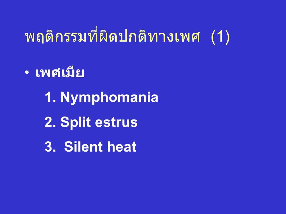 พฤติกรรมที่ผิดปกติทางเพศ (1) เพศเมีย 1. Nymphomania 2. Split estrus 3. Silent heat
