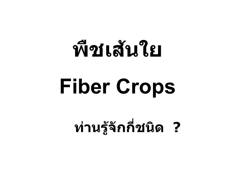 พืชเส้นใย Fiber Crops ท่านรู้จักกี่ชนิด ?