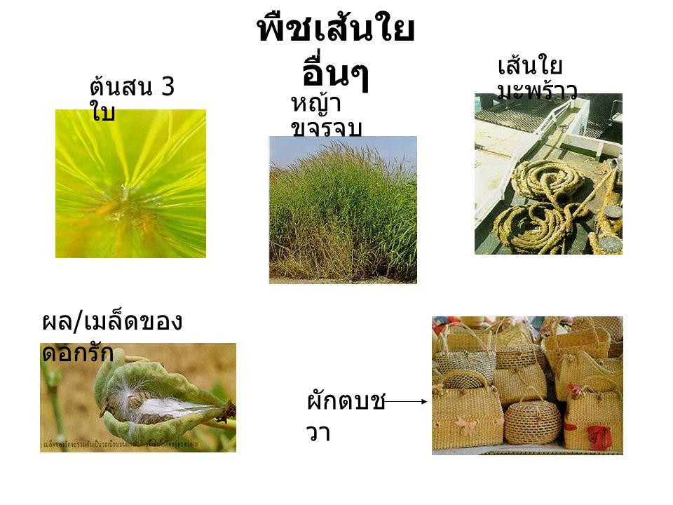 ต้นสน 3 ใบ เส้นใย มะพร้าว หญ้า ขจรจบ ผล / เมล็ดของ ดอกรัก ผักตบช วา พืชเส้นใย อื่นๆ