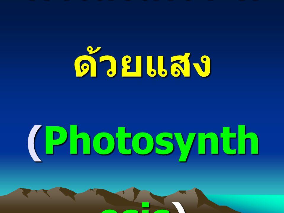 การสังเคราะห์ ด้วยแสง (Photosynth esis)