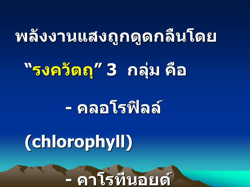 """พลังงานแสงถูกดูดกลืนโดย """" รงควัตถุ """" 3 กลุ่ม คือ - คลอโรฟิลล์ (chlorophyll) - คาโรทีนอยด์ (caroteniods) - ไฟโคบิลิน (phycobilin)"""