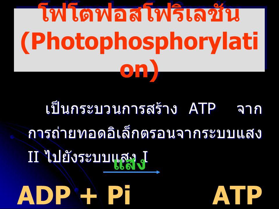 โฟโตฟอสโฟริเลชัน (Photophosphorylati on) เป็นกระบวนการสร้าง ATP จาก การถ่ายทอดอิเล็กตรอนจากระบบแสง II ไปยังระบบแสง I ADP + PiATP + H 2 O แสง
