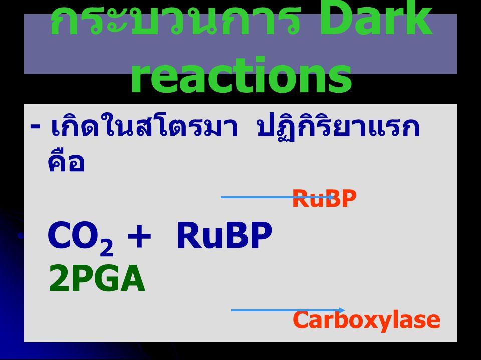 กระบวนการ Dark reactions - เกิดในสโตรมา ปฏิกิริยาแรก คือ RuBP CO 2 + RuBP 2PGA Carboxylase จากนั้น PGA PGAL