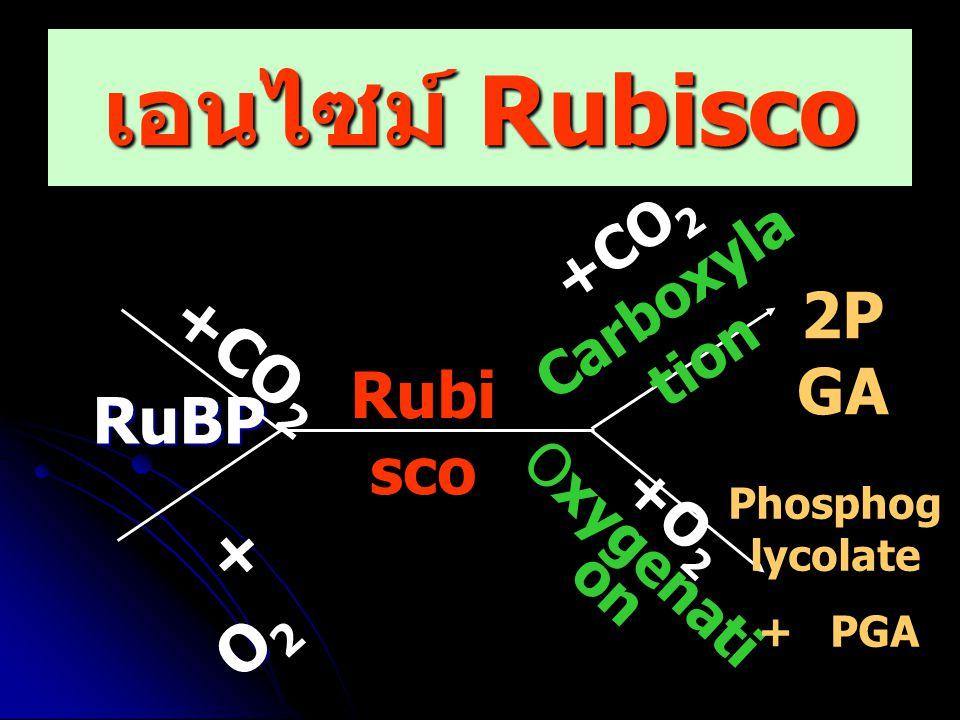 ปัจจัยภายนอก 1. อุณหภูมิ 2. แสง 3. คาร์บอนไดออกไซด์