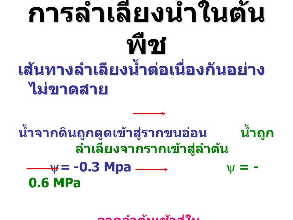 การลำเลียงน้ำในต้น พืช เส้นทางลำเลียงน้ำต่อเนื่องกันอย่าง ไม่ขาดสาย น้ำจากดินถูกดูดเข้าสู่รากขนอ่อน น้ำถูก ลำเลียงจากรากเข้าสู่ลำต้น  = -0.3 Mpa  =