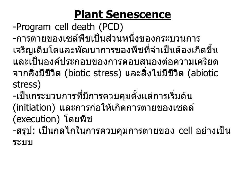 Plant Senescence -Program cell death (PCD) - การตายของเซล์พืชเป็นส่วนหนึ่งของกระบวนการ เจริญเติบโตและพัฒนาการของพืชที่จำเป็นต้องเกิดขึ้น และเป็นองค์ประกอบของการตอบสนองต่อความเครียด จากสิ่งมีชีวิต (biotic stress) และสิ่งไม่มีชีวิต (abiotic stress) - เป็นกระบวนการที่มีการควบคุมตั้งแต่การเริ่มต้น (initiation) และการก่อให้เกิดการตายของเซลล์ (execution) โดยพืช - สรุป : เป็นกลไกในการควบคุมการตายของ cell อย่างเป็น ระบบ