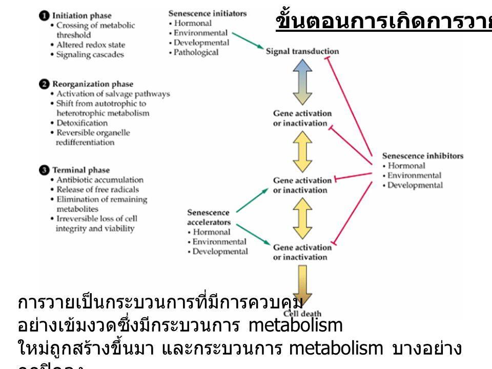 การวายเป็นกระบวนการที่มีการควบคุม อย่างเข้มงวดซึ่งมีกระบวนการ metabolism ใหม่ถูกสร้างขึ้นมา และกระบวนการ metabolism บางอย่าง ถูกปิดลง ขั้นตอนการเกิดกา