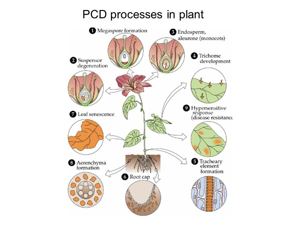Protein metabolism (photosynthesis)