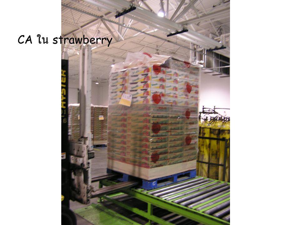 CA ใน strawberry