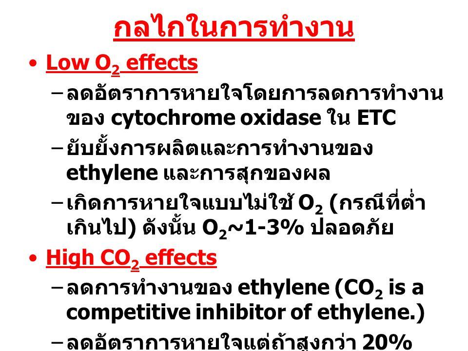 กลไกในการทำงาน Low O 2 effects – ลดอัตราการหายใจโดยการลดการทำงาน ของ cytochrome oxidase ใน ETC – ยับยั้งการผลิตและการทำงานของ ethylene และการสุกของผล
