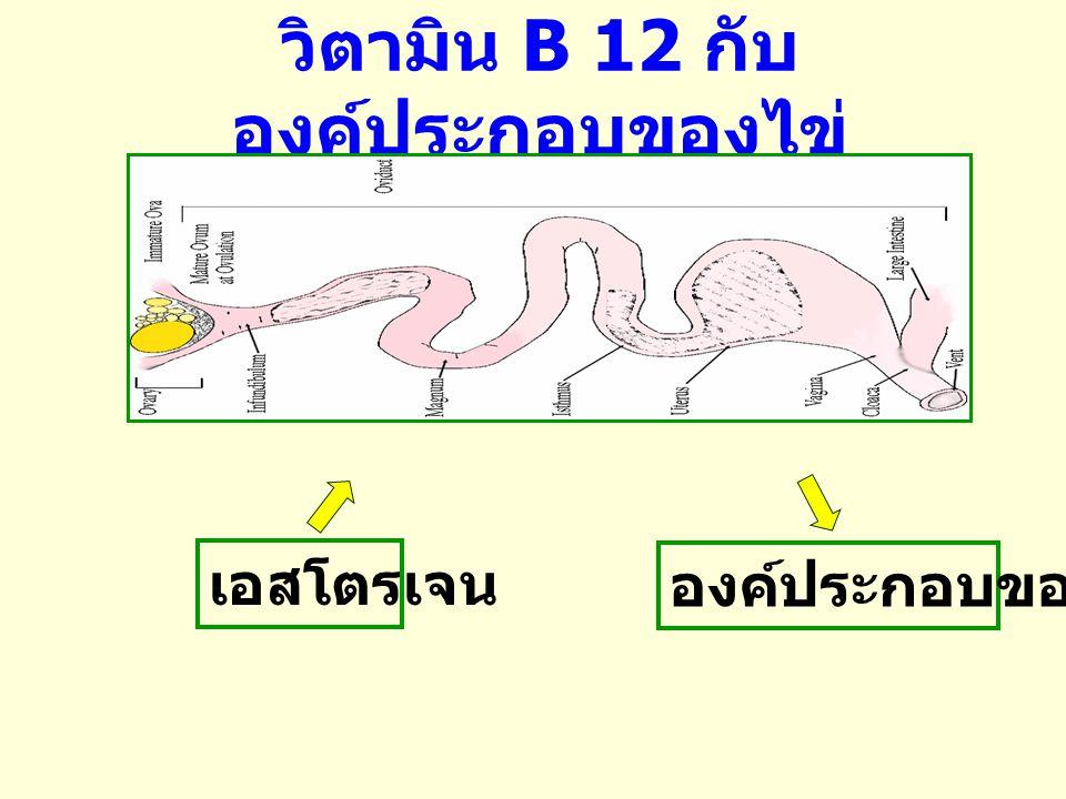 * a, b ค่าสถิติที่มีความแตกต่างอย่างมีนัยสำคัญ (P< 0.05) ที่มา : สมปอง และคณะ (2548) การ เสริม วิตามิน บี 12 (mg/kg diet) น้ำหนัก (%) ความยาว ของท่อนำ ไข่ (cm) สัดส่วน ไข่แดง ต่อไข่ ขาว ( %) ไข่ แดง ไข่ ขาว 0 26.36 a 64.07 a 73.22 a 0.41 a 0.01 26.10 ab 64.27 ab 73.72 ab 0.40 ab 0.08 25.62 b 64.93 b 75.16 b 0.39 b ตารางที่ 1 การเสริมวิตามิน B12 ต่อองค์ประกอบของไข่ และขนาดของท่อนำไข่ ในไก่ช่วงอายุ 64 สัปดาห์