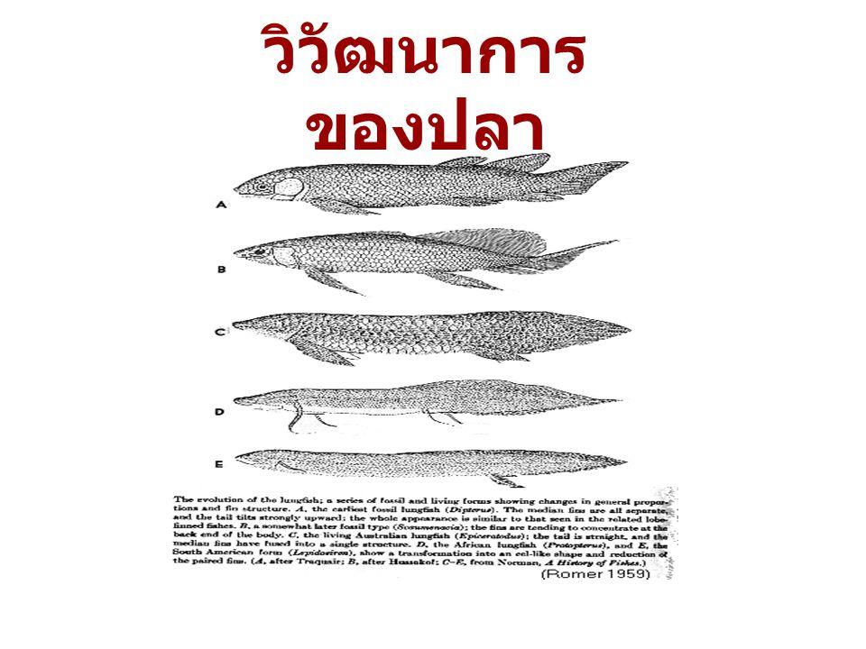วิวัฒนาการ ของปลา