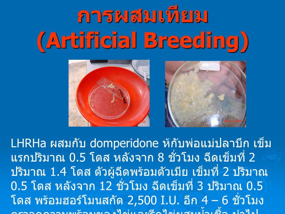 การผสมเทียม (Artificial Breeding) LHRHa ผสมกับ domperidone ห้กับพ่อแม่ปลาบึก เข็ม แรกปริมาณ 0.5 โดส หลังจาก 8 ชั่วโมง ฉีดเข็มที่ 2 ปริมาณ 1.4 โดส ตัวผู้ฉีดพร้อมตัวเมีย เข็มที่ 2 ปริมาณ 0.5 โดส หลังจาก 12 ชั่วโมง ฉีดเข็มที่ 3 ปริมาณ 0.5 โดส พร้อมฮอร์โมนสกัด 2,500 I.U.