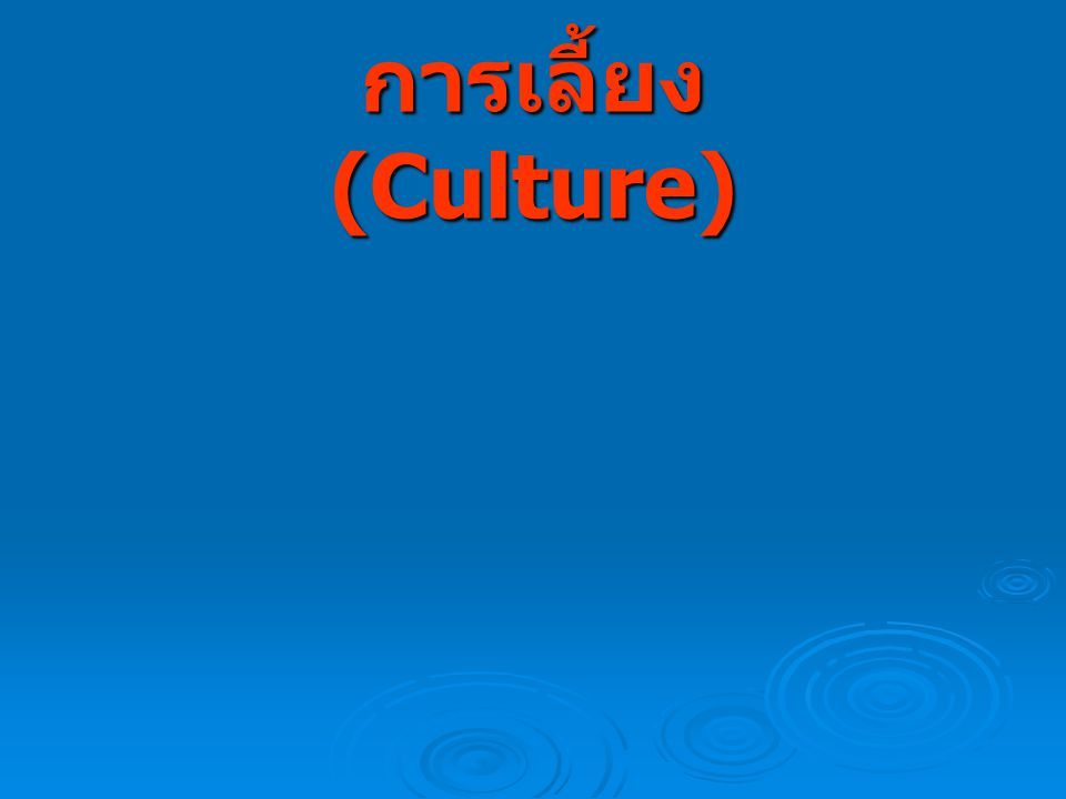 การเลี้ยง (Culture)