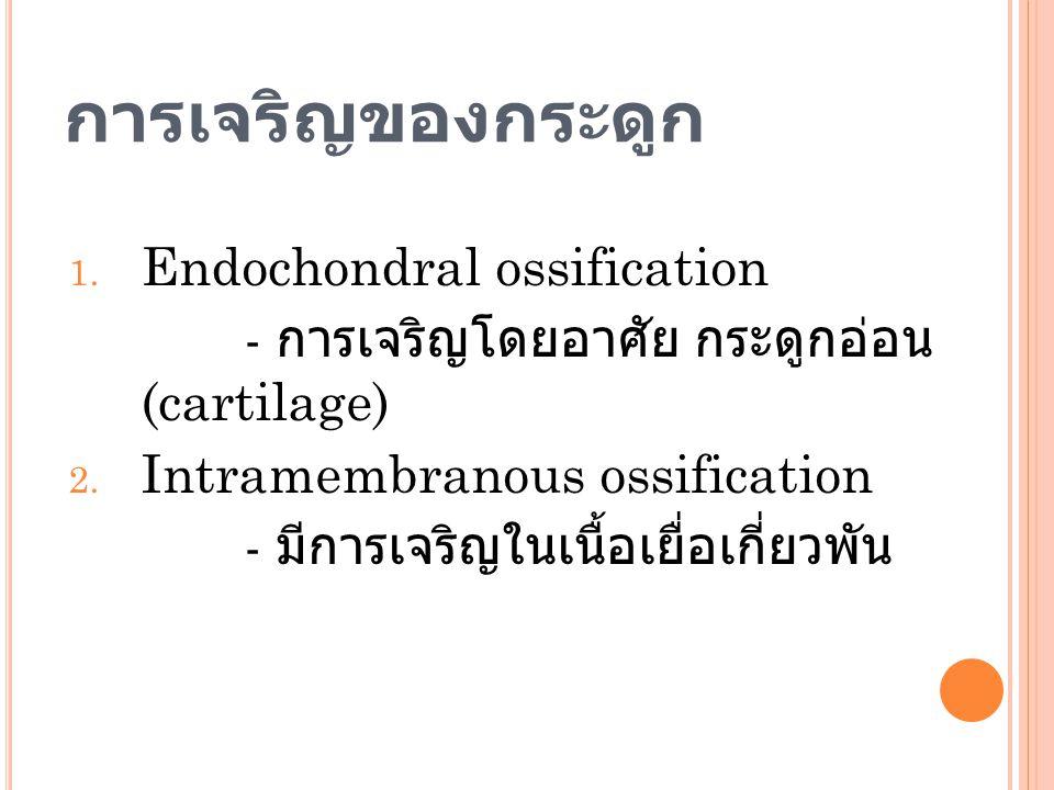 การเจริญของกระดูก 1. Endochondral ossification - การเจริญโดยอาศัย กระดูกอ่อน (cartilage) 2. Intramembranous ossification - มีการเจริญในเนื้อเยื่อเกี่ย