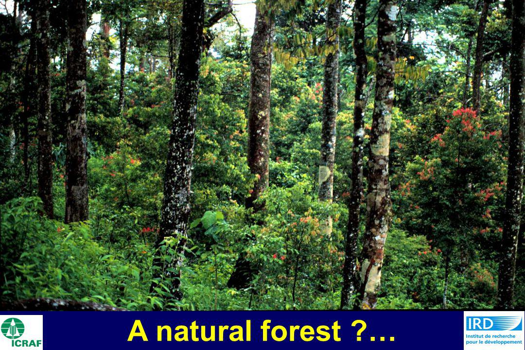 A natural forest ?…