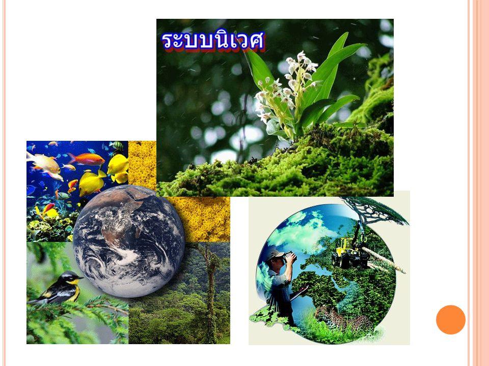 ระบบนิเวศ (ECOSYSTEM) ความหมายของระบบนิเวศ (Ecosystem) ระบบนิเวศเป็นหน่วยที่สำคัญที่สุดในการศึกษา ความสัมพันธ์ระหว่างสิ่งมีชีวิต และสิ่งแวดล้อม เพราะ ประกอบไปด้วยสิ่งมีชีวิตหลากหลายชนิด มีการแลกเปลี่ยน สสาร แร่ธาตุ และพลังงานกับสิ่งแวดล้อม โดยผ่านห่วงโซ่ อาหาร (food chain) มีลำดับของการกินเป็นทอด ๆ ทำให้ สสารและแร่ธาตุมีการหมุนเวียนไปใช้ในระบบจนเกิดเป็นวัฏ จักร ทำให้มีการถ่ายทอดพลังงานไปตามลำดับขั้นเป็นช่วง ๆในห่วงโซ่อาหารได้ การจำแนกองค์ประกอบของระบบ นิเวศ ส่วนใหญ่จะจำแนกได้เป็นสององค์ประกอบใหญ่ ๆ คือ องค์ประกอบที่มีชีวิตและองค์ประกอบที่ไม่มีชีวิต
