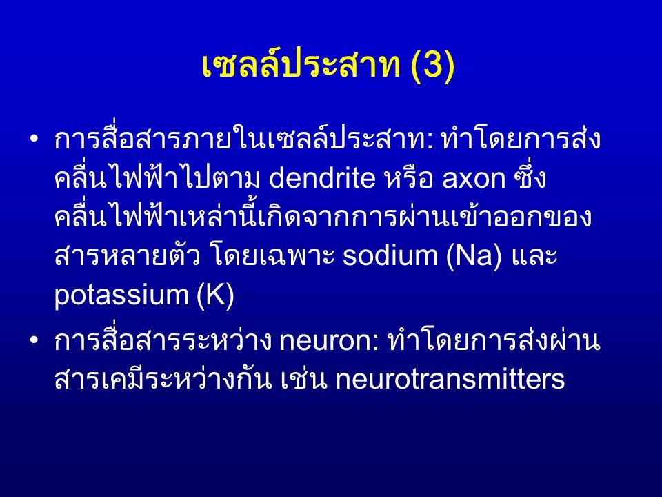 เซลล์ประสาท (3) การสื่อสารภายในเซลล์ประสาท: ทำโดยการส่ง คลื่นไฟฟ้าไปตาม dendrite หรือ axon ซึ่ง คลื่นไฟฟ้าเหล่านี้เกิดจากการผ่านเข้าออกของ สารหลายตัว