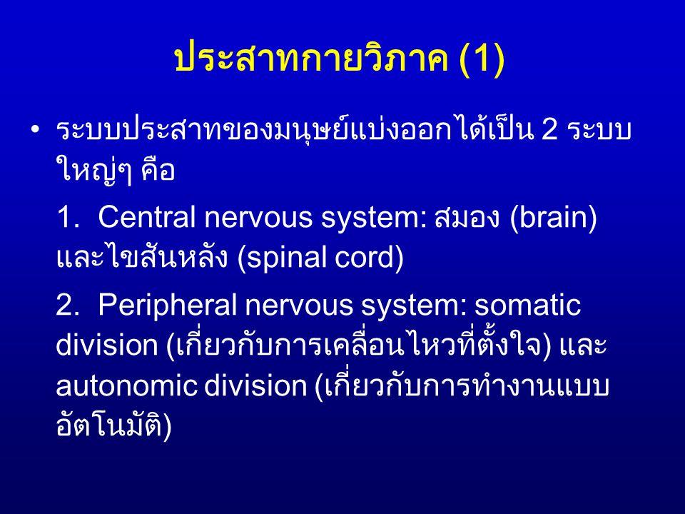 ประสาทกายวิภาค (1) ระบบประสาทของมนุษย์แบ่งออกได้เป็น 2 ระบบ ใหญ่ๆ คือ 1. Central nervous system: สมอง (brain) และไขสันหลัง (spinal cord) 2. Peripheral