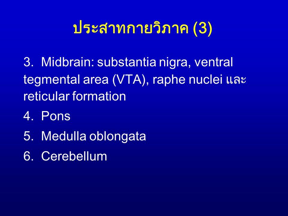 ประสาทกายวิภาค (3) 3. Midbrain: substantia nigra, ventral tegmental area (VTA), raphe nuclei และ reticular formation 4. Pons 5. Medulla oblongata 6. C