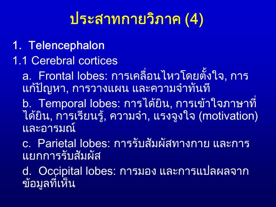 ประสาทกายวิภาค (4) 1. Telencephalon 1.1 Cerebral cortices a. Frontal lobes: การเคลื่อนไหวโดยตั้งใจ, การ แก้ปัญหา, การวางแผน และความจำทันที b. Temporal