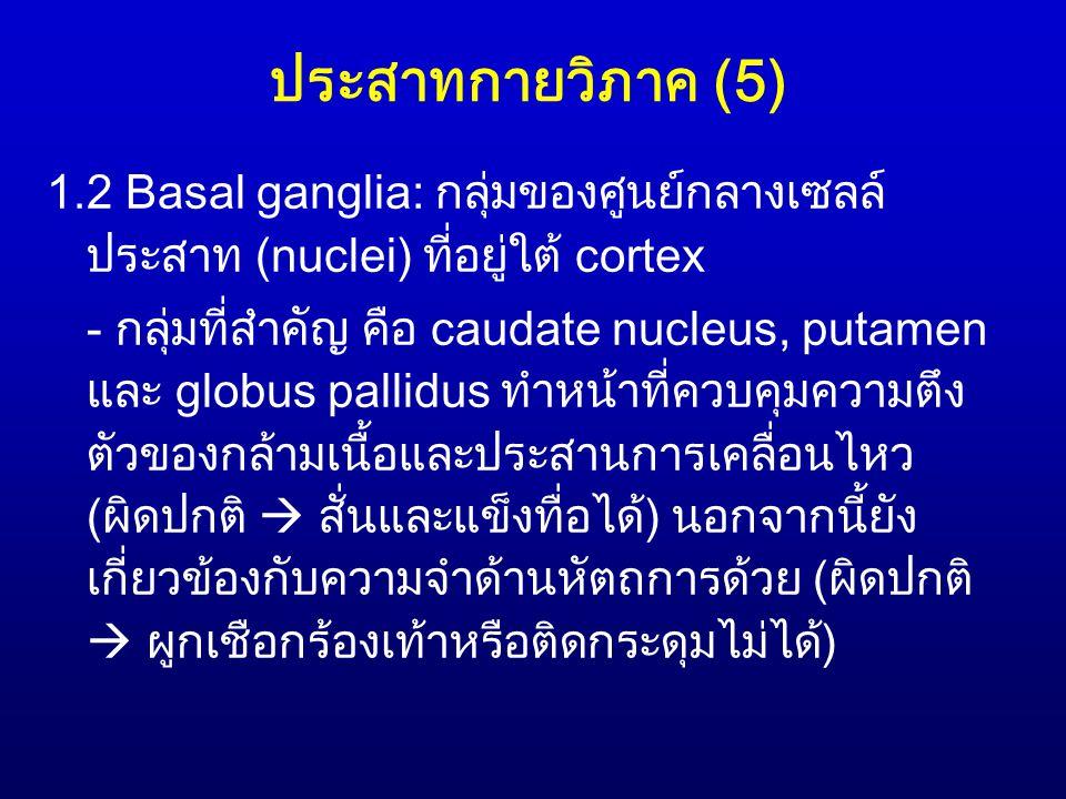 ประสาทกายวิภาค (5) 1.2 Basal ganglia: กลุ่มของศูนย์กลางเซลล์ ประสาท (nuclei) ที่อยู่ใต้ cortex - กลุ่มที่สำคัญ คือ caudate nucleus, putamen และ globus