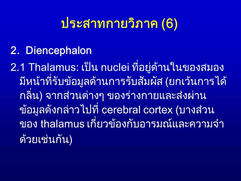 ประสาทกายวิภาค (6) 2. Diencephalon 2.1 Thalamus: เป็น nuclei ที่อยู่ด้านในของสมอง มีหน้าที่รับข้อมูลด้านการรับสัมผัส (ยกเว้นการได้ กลิ่น) จากส่วนต่างๆ