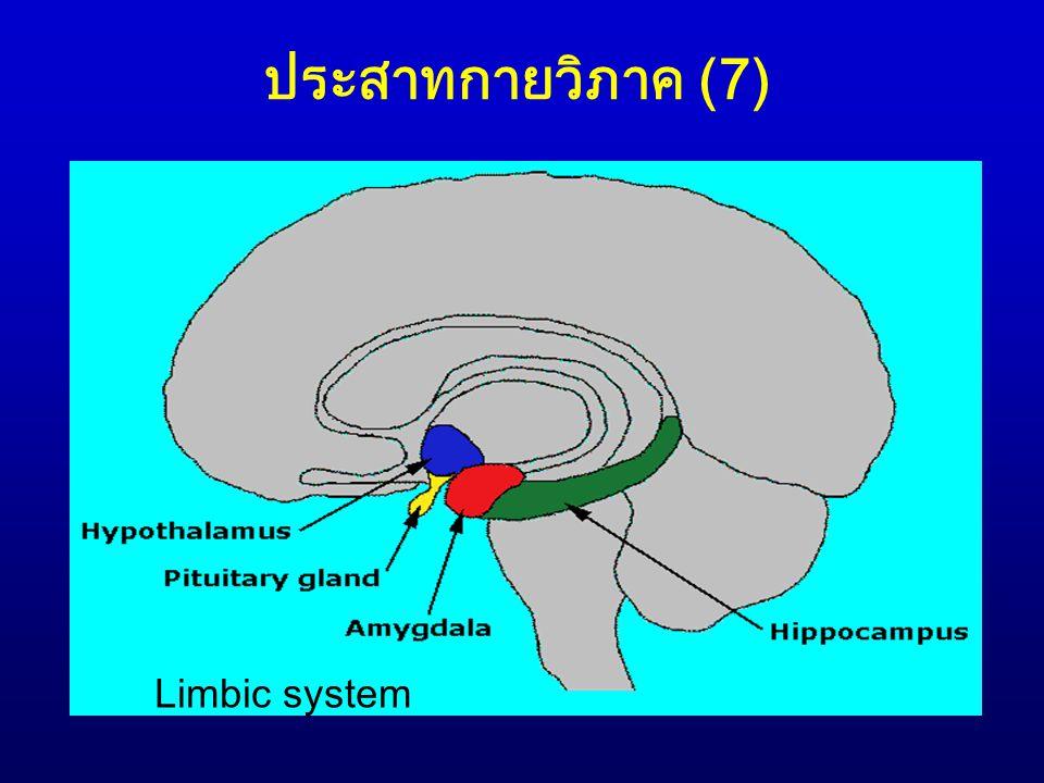 ประสาทกายวิภาค (8) 2.2 Limbic system: เกี่ยวข้องกับอารมณ์ ความ ผิดปกติที่ระบบนี้อาจเป็นสาเหตุให้เกิดอารมณ์ การโกรธรุนแรง, ความวิตกกังวล, ความต้องการ ทางเพศมากขึ้นหรือน้อยลง 2.3 Hypothalamus: เป็นส่วนหนึ่งของ limbic system มีหน้าที่เกี่ยวกับวงจรหลับ-ตื่น (sleep- wake cycle), ควบคุมระบบประสาทอัตโนมัติ/การ ทำงานของ pituitary gland, ความหิว และความ ก้าวร้าว