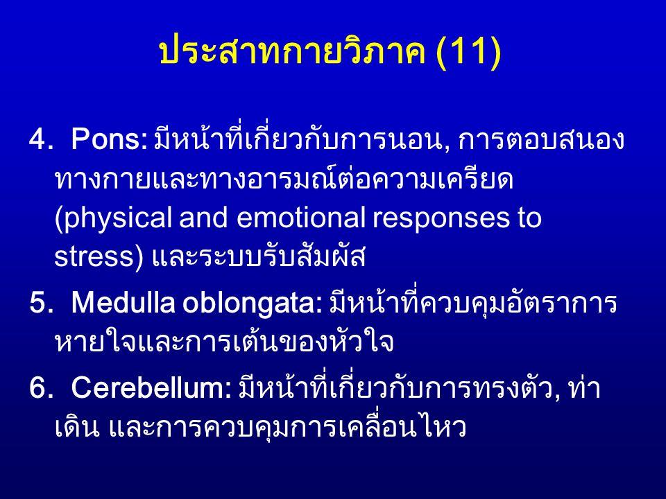 ประสาทกายวิภาค (11) 4. Pons: มีหน้าที่เกี่ยวกับการนอน, การตอบสนอง ทางกายและทางอารมณ์ต่อความเครียด (physical and emotional responses to stress) และระบบ