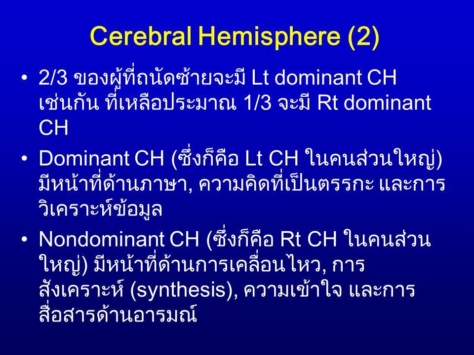 Cerebral Hemisphere (2) 2/3 ของผู้ที่ถนัดซ้ายจะมี Lt dominant CH เช่นกัน ที่เหลือประมาณ 1/3 จะมี Rt dominant CH Dominant CH (ซึ่งก็คือ Lt CH ในคนส่วนใหญ่) มีหน้าที่ด้านภาษา, ความคิดที่เป็นตรรกะ และการ วิเคราะห์ข้อมูล Nondominant CH (ซึ่งก็คือ Rt CH ในคนส่วน ใหญ่) มีหน้าที่ด้านการเคลื่อนไหว, การ สังเคราะห์ (synthesis), ความเข้าใจ และการ สื่อสารด้านอารมณ์