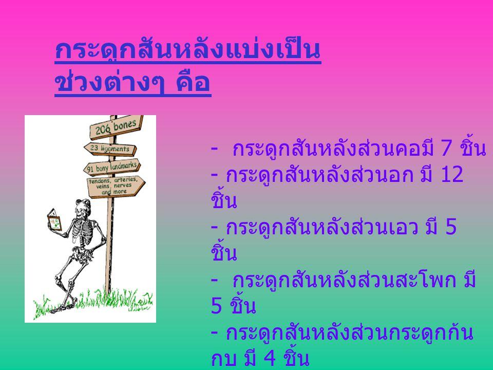 กระดูกสันหลังแบ่งเป็น ช่วงต่างๆ คือ - กระดูกสันหลังส่วนคอมี 7 ชิ้น - กระดูกสันหลังส่วนอก มี 12 ชิ้น - กระดูกสันหลังส่วนเอว มี 5 ชิ้น - กระดูกสันหลังส่