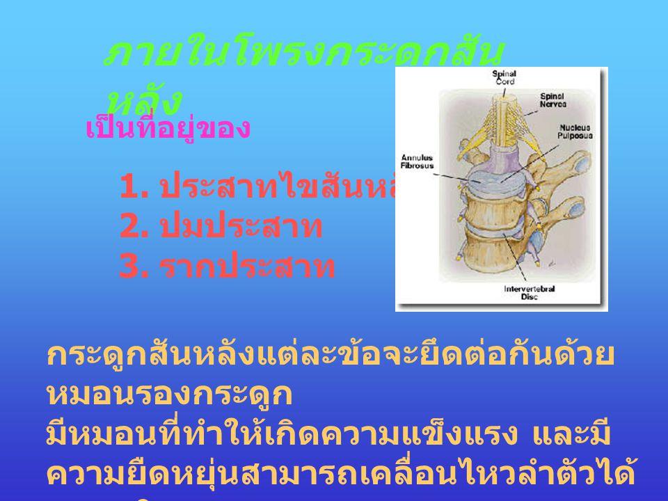ภายในโพรงกระดูกสัน หลัง เป็นที่อยู่ของ 1. ประสาทไขสันหลัง 2. ปมประสาท 3. รากประสาท กระดูกสันหลังแต่ละข้อจะยึดต่อกันด้วย หมอนรองกระดูก มีหมอนที่ทำให้เก