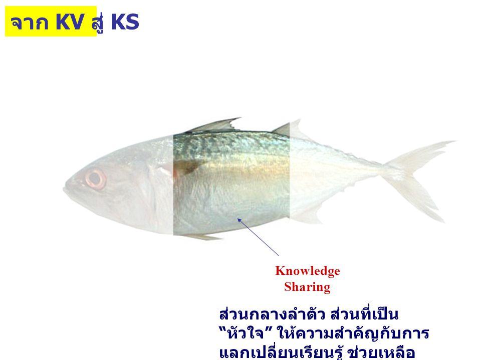 KS Knowledge Sharing ส่วนกลางลำตัว ส่วนที่เป็น หัวใจ ให้ความสำคัญกับการ แลกเปลี่ยนเรียนรู้ ช่วยเหลือ เกื้อกูลซึ่งกันและกัน จาก KV สู่ KS