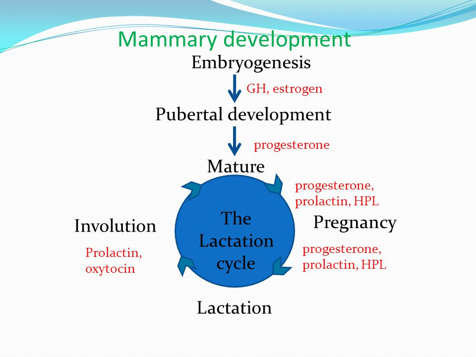 The Lactation cycle Mature Pregnancy Involution Lactation Pubertal development Embryogenesis Mammary development GH, estrogen progesterone, prolactin,