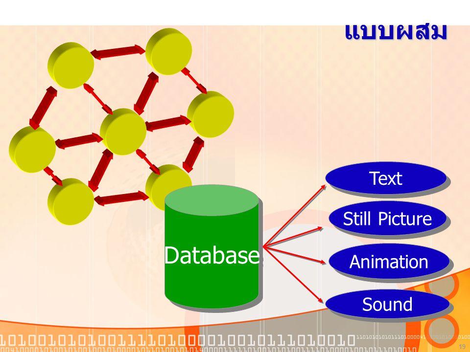 19 แบบผสม Database Text Still Picture Animation Sound