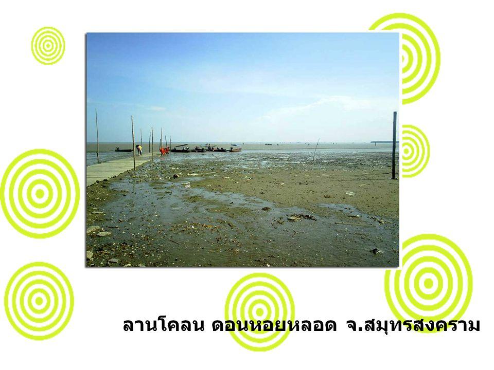 ลานโคลน ดอนหอยหลอด จ. สมุทรสงคราม