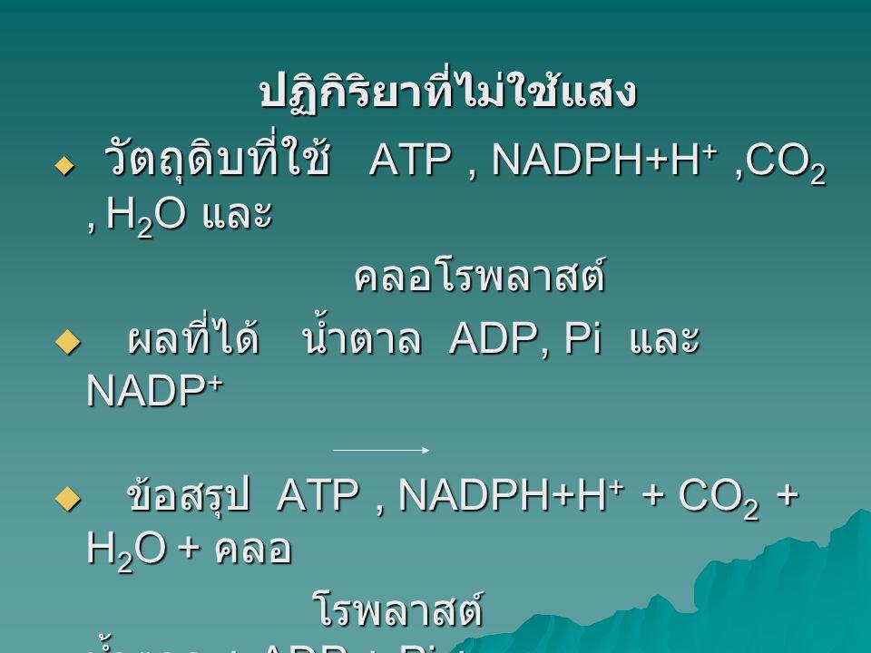 ปฏิกิริยาที่ไม่ใช้แสง  วัตถุดิบที่ใช้ ATP, NADPH+H +,CO 2, H 2 O และ คลอโรพลาสต์ คลอโรพลาสต์  ผลที่ได้ น้ำตาล ADP, Pi และ NADP +  ข้อสรุป ATP, NADP