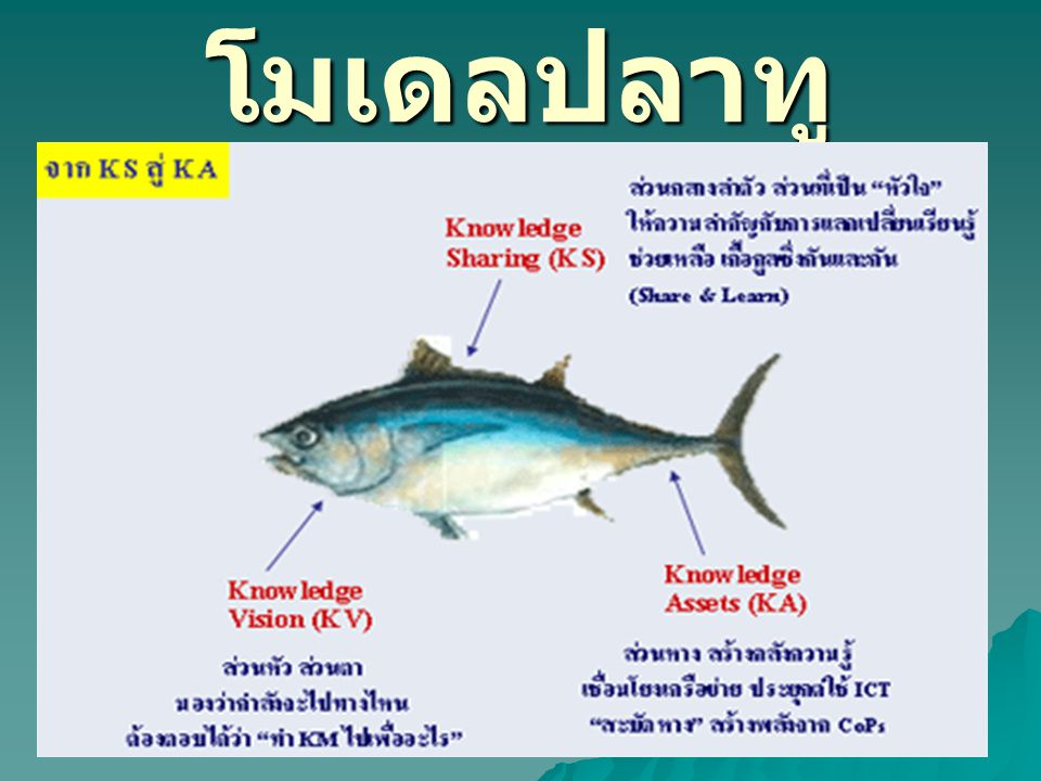 โมเดลปลาทู